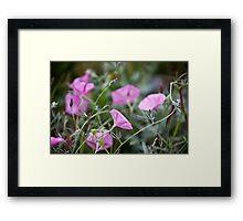 Pink Bindweeds in a field Framed Print