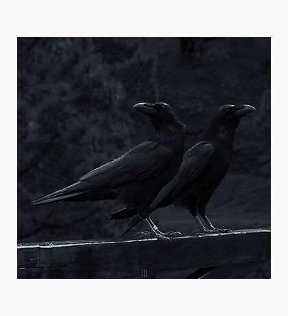 Huginn and Muninn Photographic Print