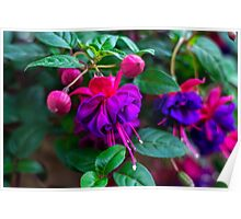 Violet Flowers - Nature Photography Poster