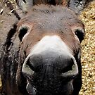 Why The Long Face by © Loree McComb