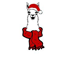 Christmas Llama  Photographic Print