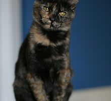 Hazel the tortie by saiberiac