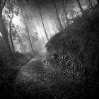 Foggy Mountain View by Richard Mason