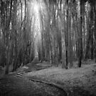 Wood Line by Richard Mason