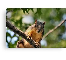 You plan to share those peanuts don't you? Canvas Print