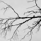 The Tortured Tree and the Crow. by Trish Meyer