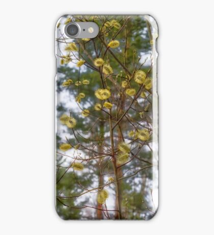 flowering shoots in the spring forest iPhone Case/Skin