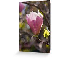 Light Through Magnolia Greeting Card