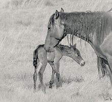 Spring Foal by Tom Becker
