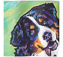 Bernese Mountain Dog Bright colorful pop dog art Poster