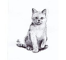 Sketch Cat Photographic Print