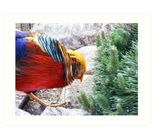 Bird Photo Art Print