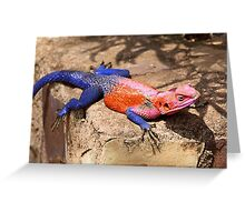 East African Rainbow Agama, Male  Greeting Card