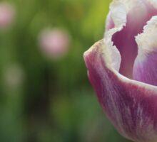 Purple Tulip Flower Sticker