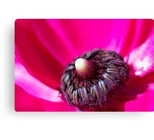 Inside Hot Pink Flower - macro Canvas Print