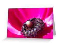 Inside Hot Pink Flower - macro Greeting Card