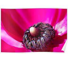 Inside Hot Pink Flower - macro Poster