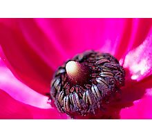Inside Hot Pink Flower - macro Photographic Print