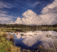 Reflections of the Florida Wetlands by James Hoffman