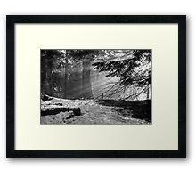 Winter Light in the Woods... Framed Print