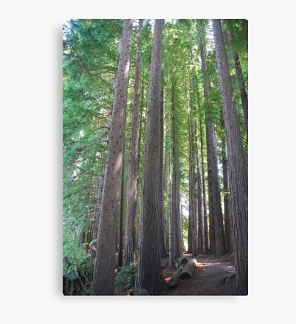 Red Wood Forest Canvas Print