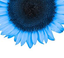 Blue Raspberry Sunflower by Fran Riley