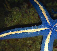 Blue Linckia Starfish by Ben Goldberg