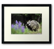 Porcupine in Lupin Framed Print