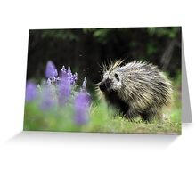 Porcupine in Lupin Greeting Card