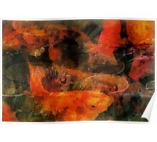 Orange koi dreams with lilies Poster