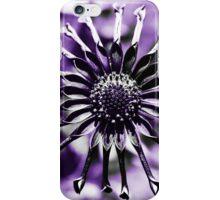 Osteospermum - Black Widow iPhone Case/Skin
