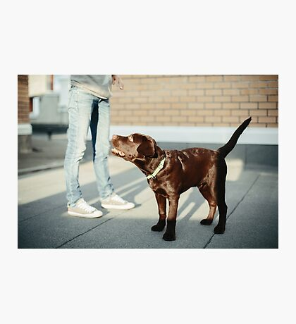 Young Woman with Chocolate Brown Labrador Photographic Print