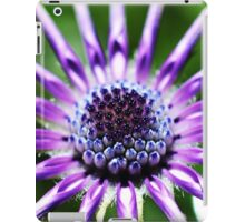 Osteospermum - Black Widow [2] iPad Case/Skin