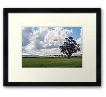 Green Barley Framed Print