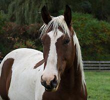 Horse Portrait by Georgia Mizuleva