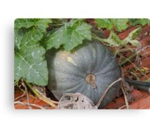 pumpkin in the garden Canvas Print