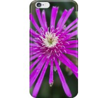 aster in the garden iPhone Case/Skin