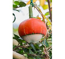 a beautiful pumpkin Photographic Print