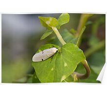 insect on leaf Poster