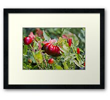 red chili Framed Print