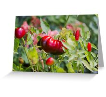 red chili Greeting Card