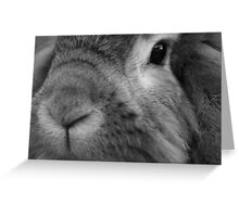 A really friendly rabbit Greeting Card