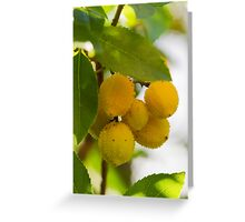 arbutus on tree Greeting Card