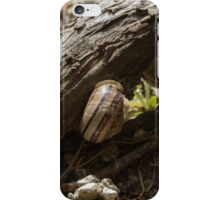 snail on the branches iPhone Case/Skin