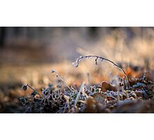 Frosty nature Photographic Print