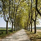 Sauternes,  a road between vineyards  by 29Breizh33