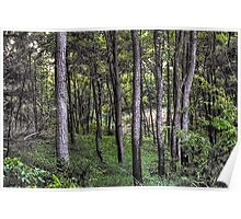Moraine Hills Forest Poster