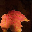 Shadows On Maple Leaf by Kathilee