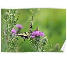 Tiger Swallowtail And Skipper Butterflies On Thistle Poster