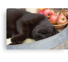 black cat on old barrel Canvas Print